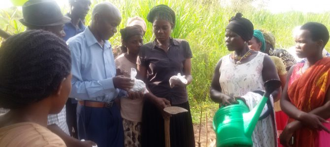 Women's groups plant trees to mitigate effects of climate change
